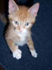 Cats are rarely controversial. Especially Biddy as a kitten.